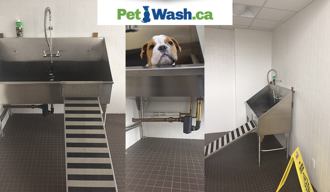 Celebrate Your Pet-friendliness With a Beautiful Pet Wash Spa!